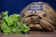 Черепаха и другая степная живность, рестения и плоды.