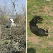 Помогите найти потерянную собаку!!!